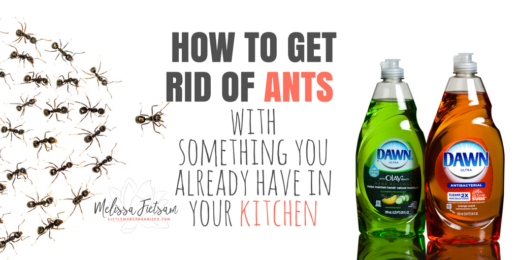 How to get rid of ants with something you already have in your kitchen